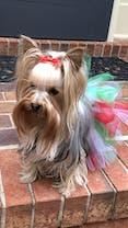 Cedar, Peppermint & Eucalyptus Conditioning Dog Shampoo USDA Certified to Organic Food Standards