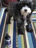 USDA Certified Organic Lavender Dog Deodorizing Spray - Relax