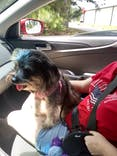2 Traveling Dogs Happy Camper USDA Certified Organic Hemp Dog Shampoo with Fir, Cedar, Lavender and Calendula