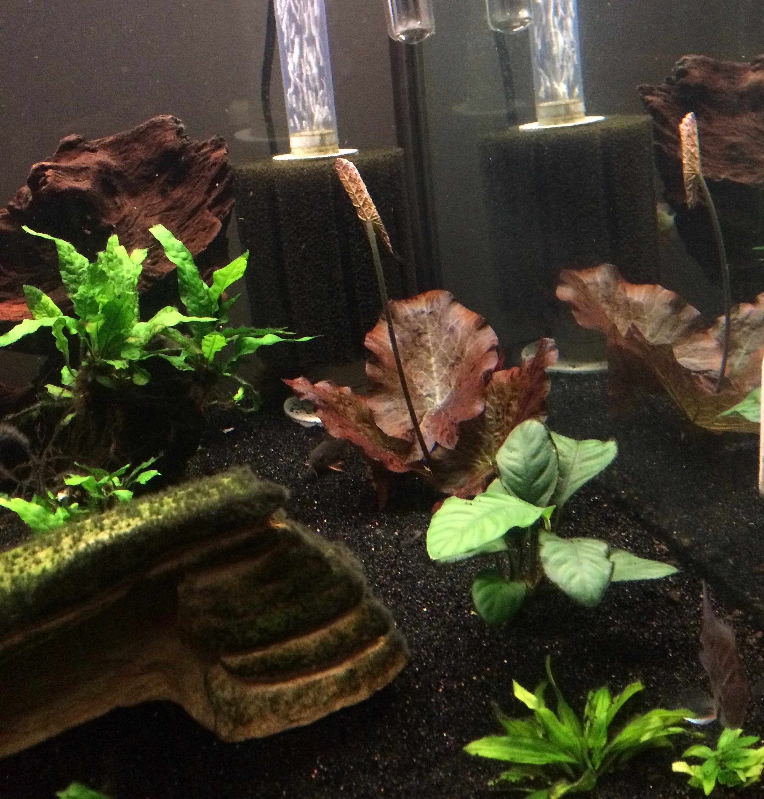 Viewer Home Show Featuring The Fish Life And The Fish Nerd