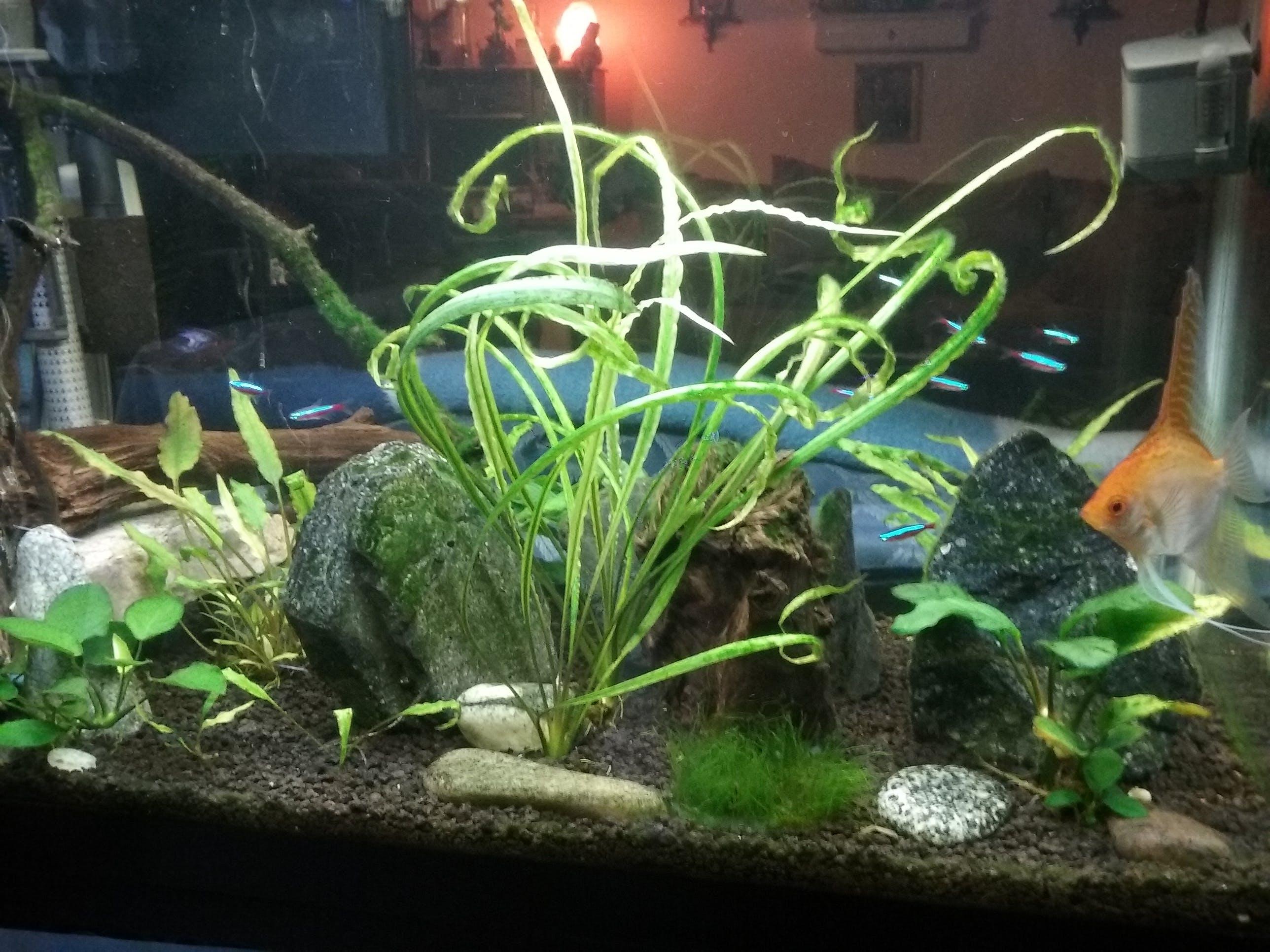 Crypt Spiralis Aquarium Co Op