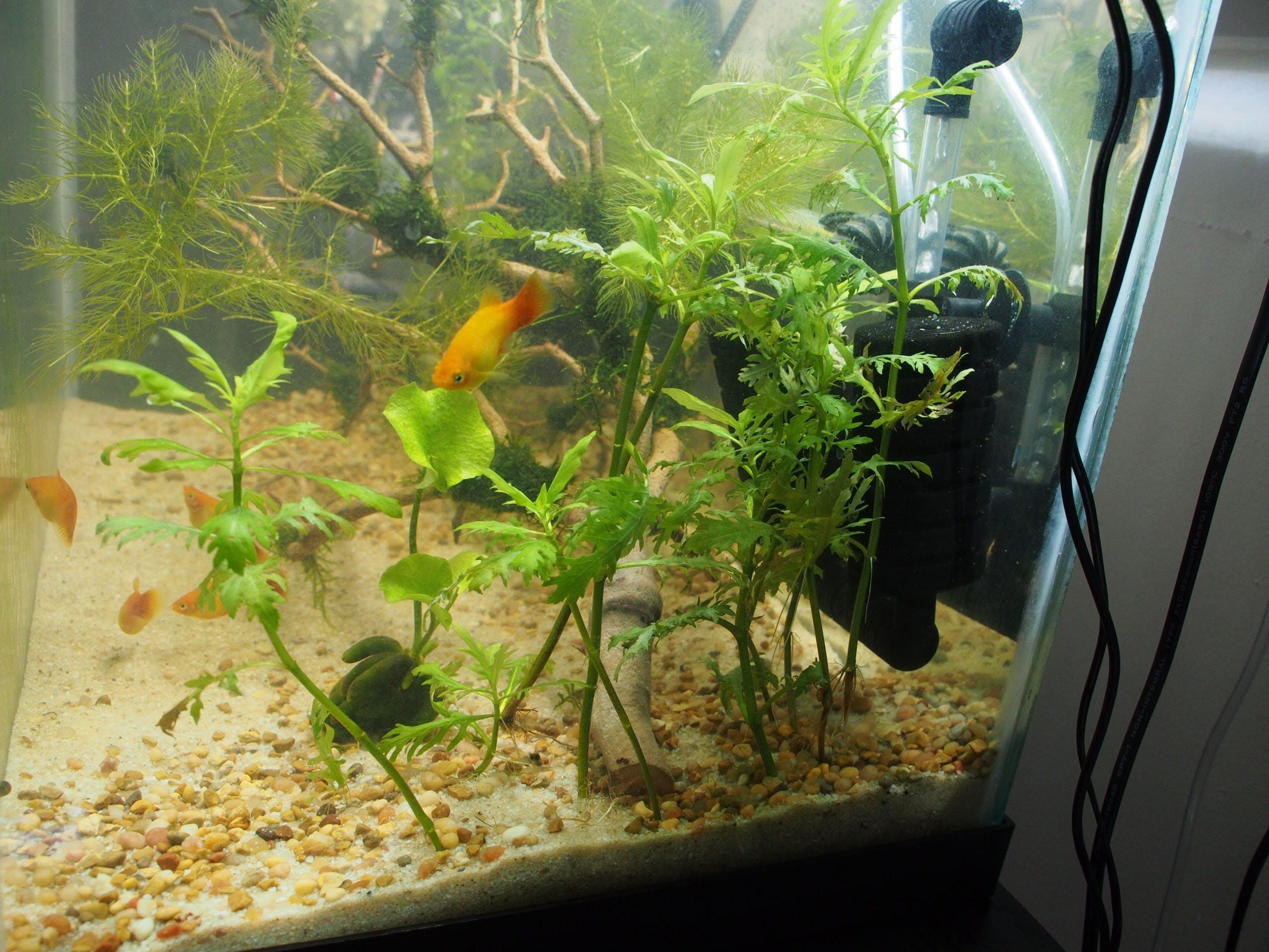 Wisteria Aquarium Co Op