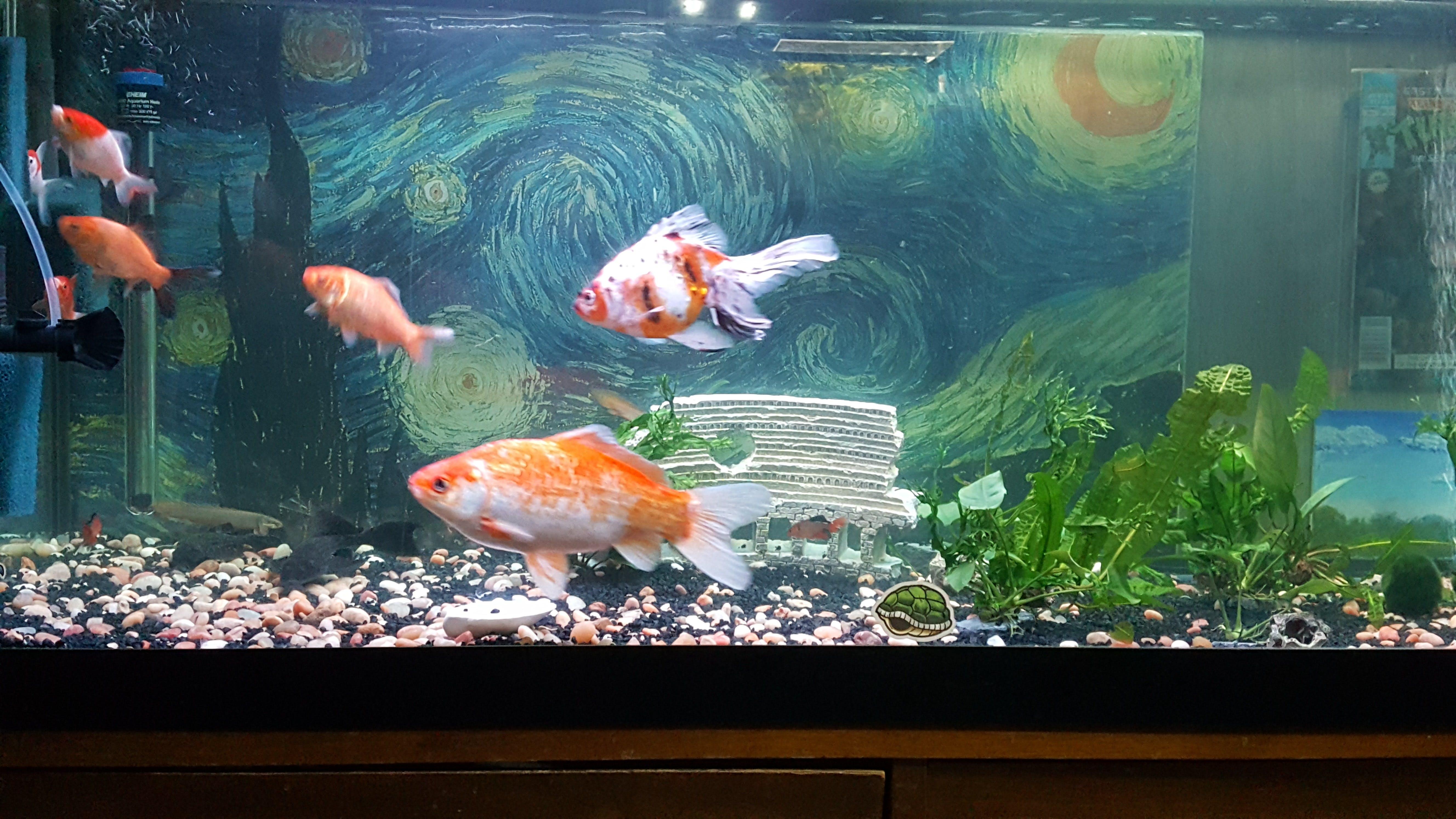 fluval bug bites goldfish formula aquarium co op. Black Bedroom Furniture Sets. Home Design Ideas
