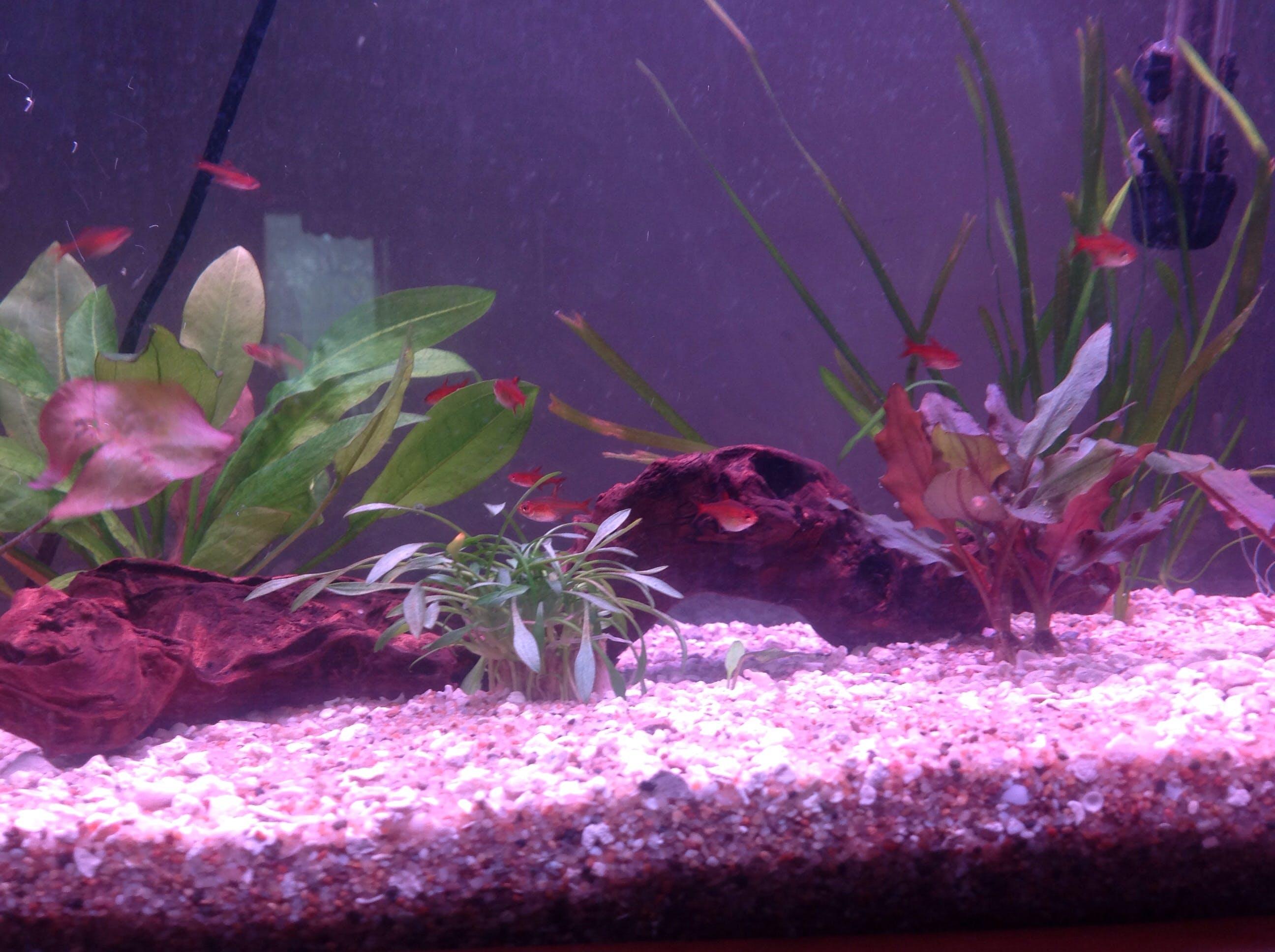 Finnex Monster Ray Aquarium Co Op