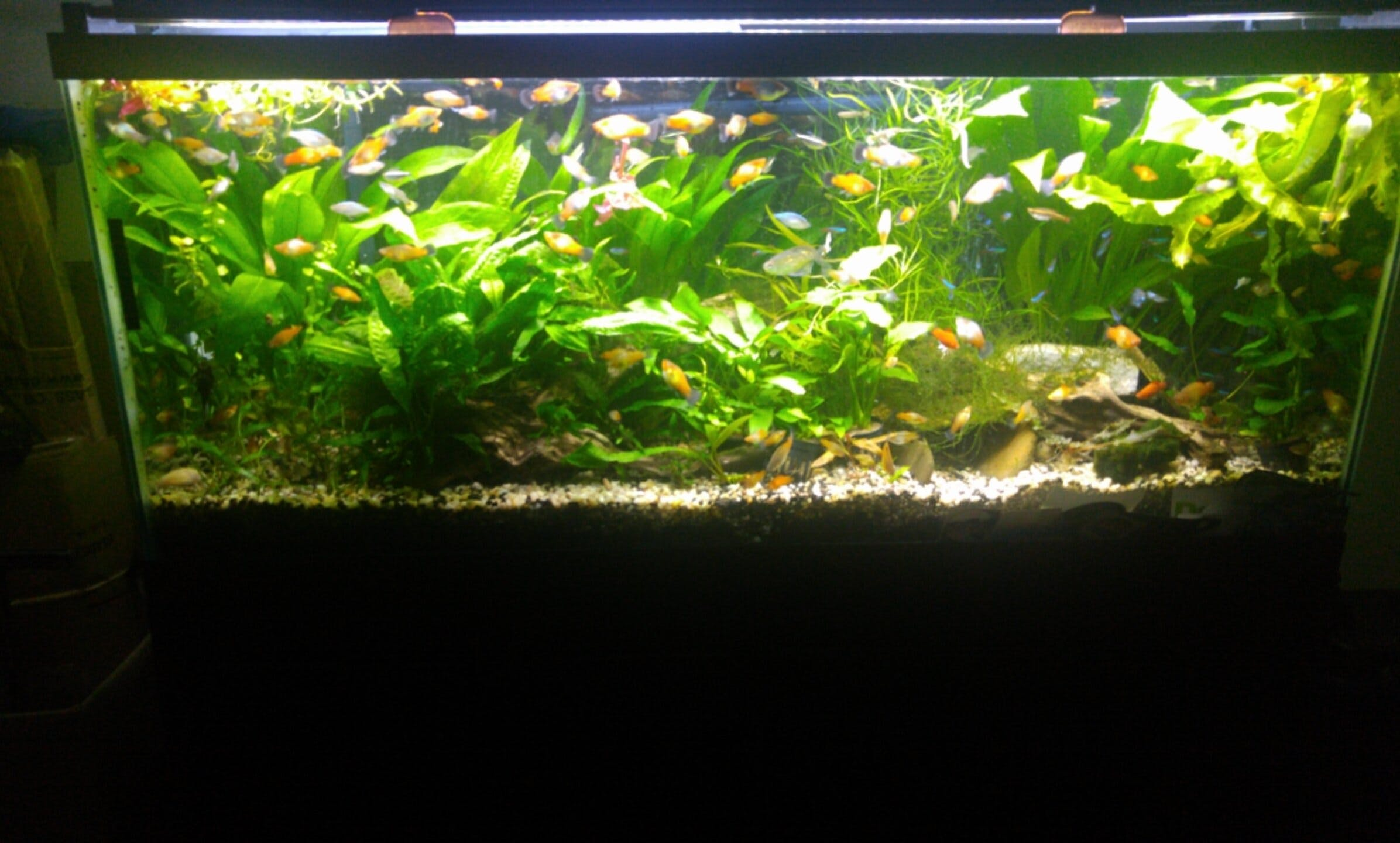 aquarium plant lighting marineland aquatic plant led. Black Bedroom Furniture Sets. Home Design Ideas