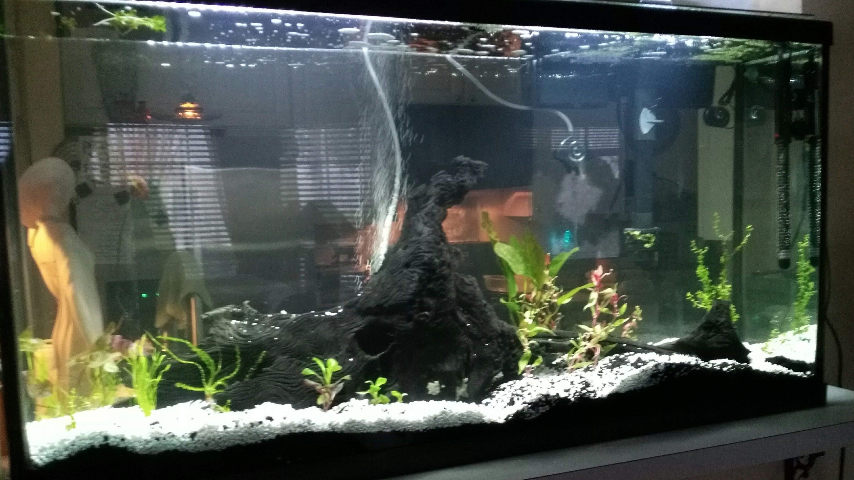 Aquarium Co Op