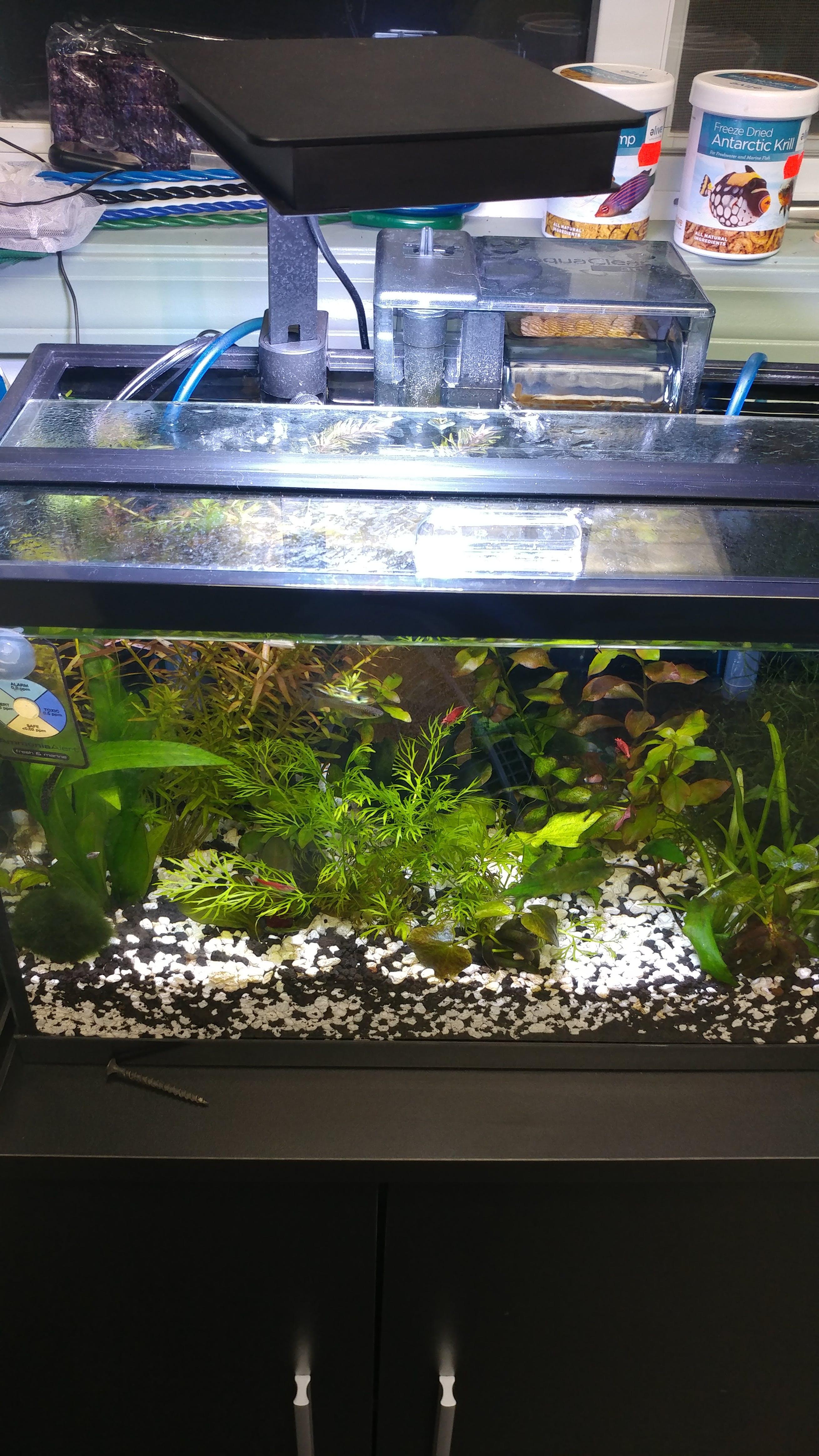 pet with led blue glofish kit ca light supplies dp amazon gallon lights aquarium