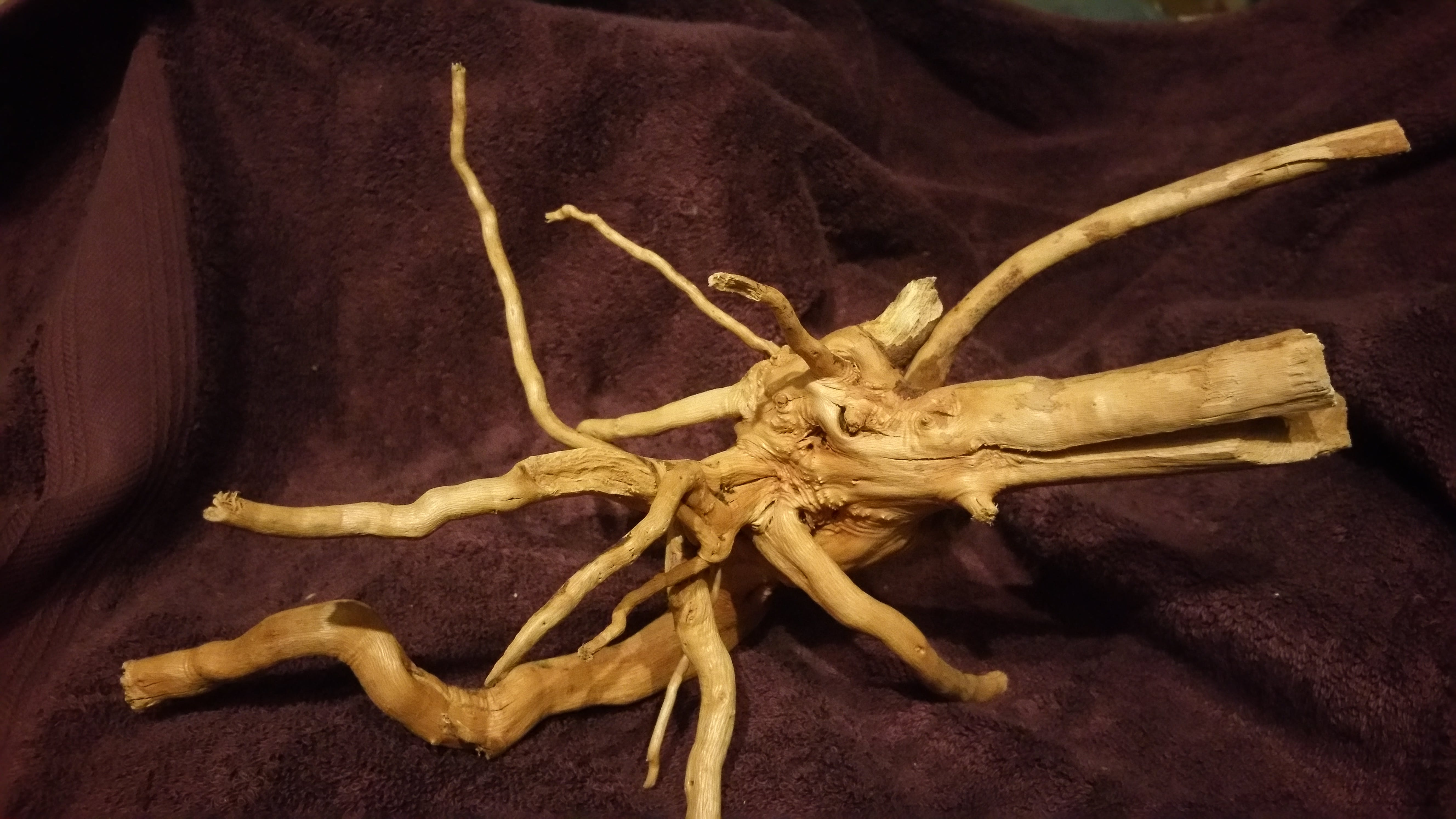 Small Spider Wood Driftwood