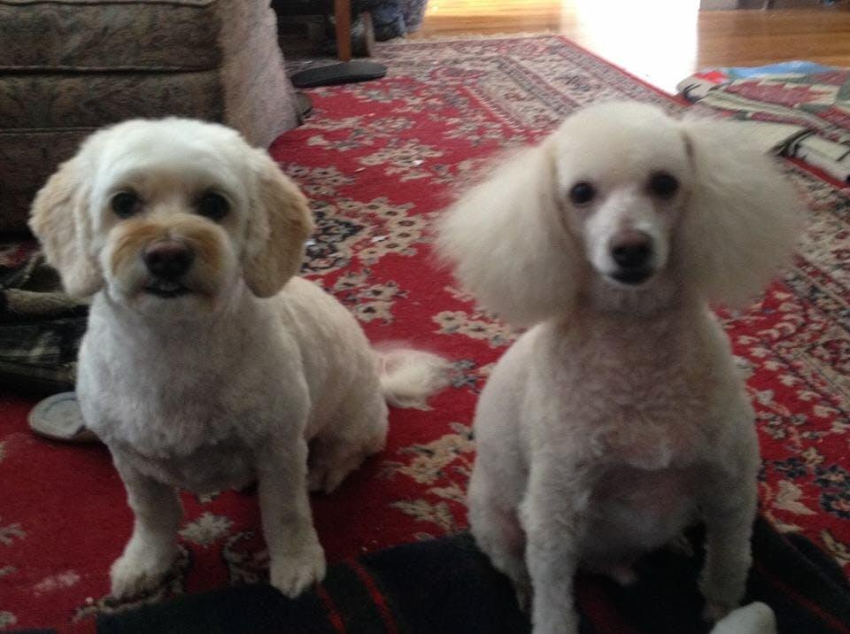 Phenobarbital For Dogs For Sale
