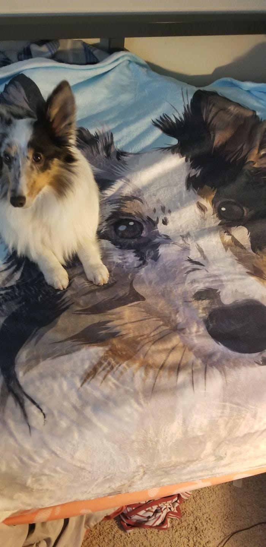 Custom Pet Fleece Blanket