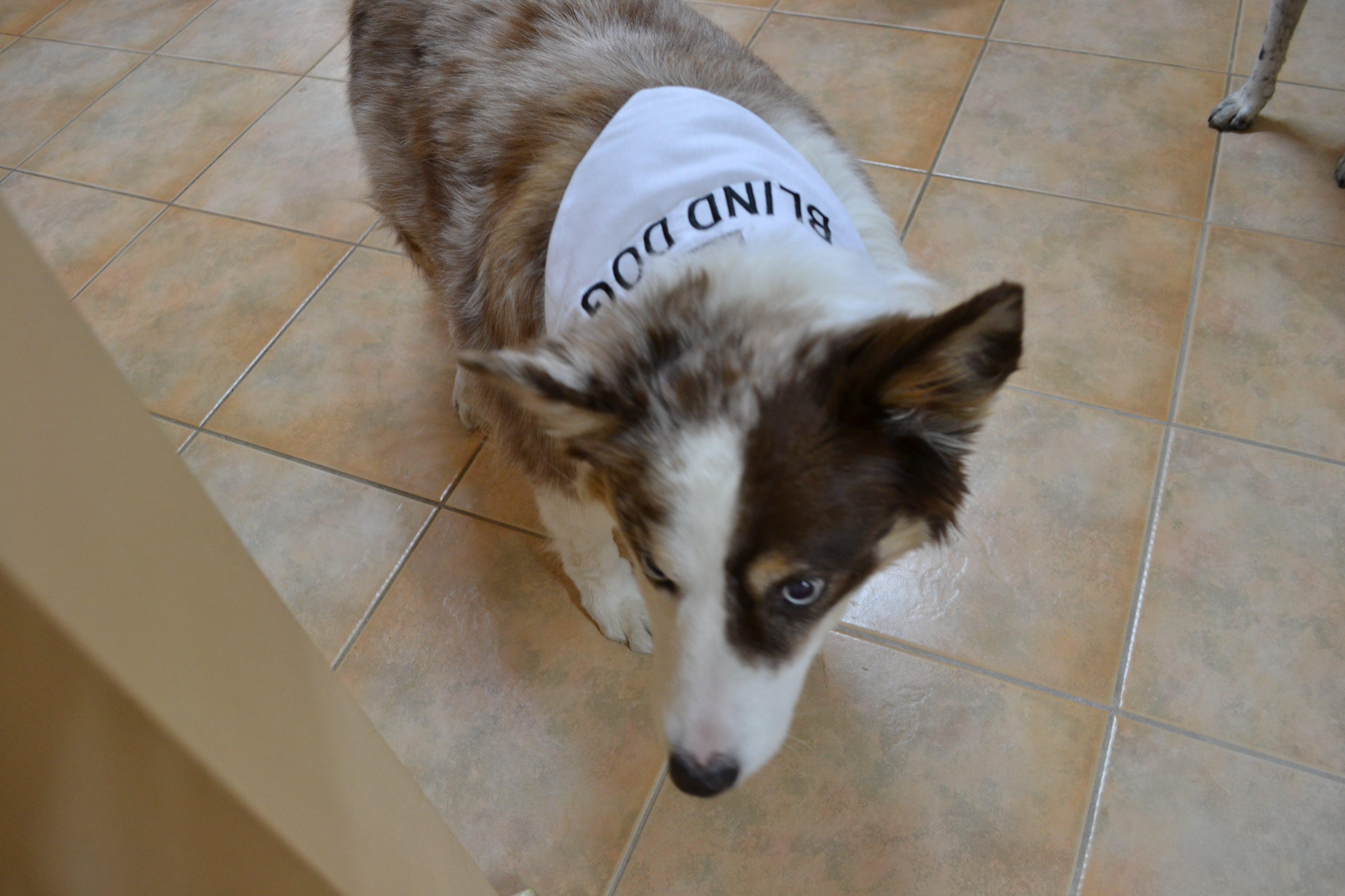 Blind Dog Bandana Friendly Dog Collars