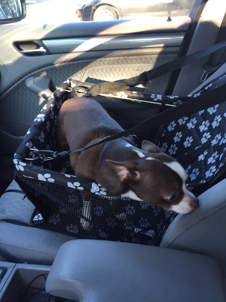 Portable Carrier Car Seat For Pets