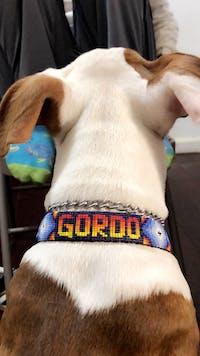 Cosmo Dog Collar