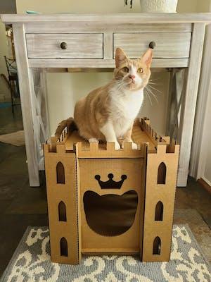 Cardboard Cat Homes
