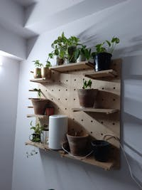 American-Elm Display Birch Plywood Pegboard for Shelving/Display Unit/Shop Display/Wall Shelves (90x50 cm)