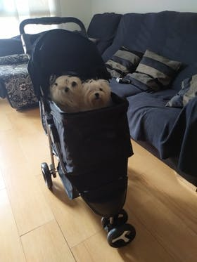 Pet Travel Stroller