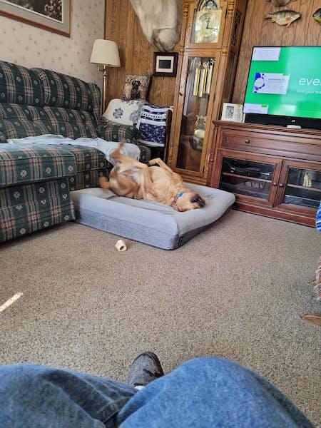 Luxury Memory Foam Dog Bed