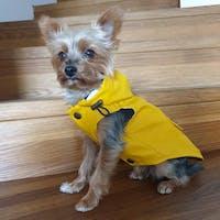 Matelot Regenjacke in Gelb