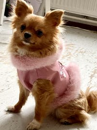 Chelsea Geschirr/Jacke in Pink