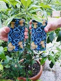 Limone Maiolica - Crystal Clear Phone Case
