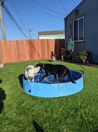 Foldable Pet Bathing Pool