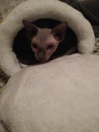 Foldable Cute Cat  Cave House