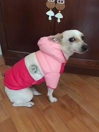 Pet's Waterproof  Warm Coat Jacket