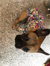 Cartoon Dog Clothes Animals T-shirt