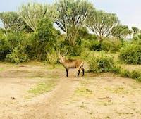 2 Days Safari to Murchison Falls National Game Park
