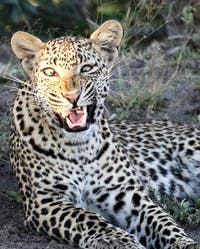 2 Days Safari To Queen Elizabeth Game Park.