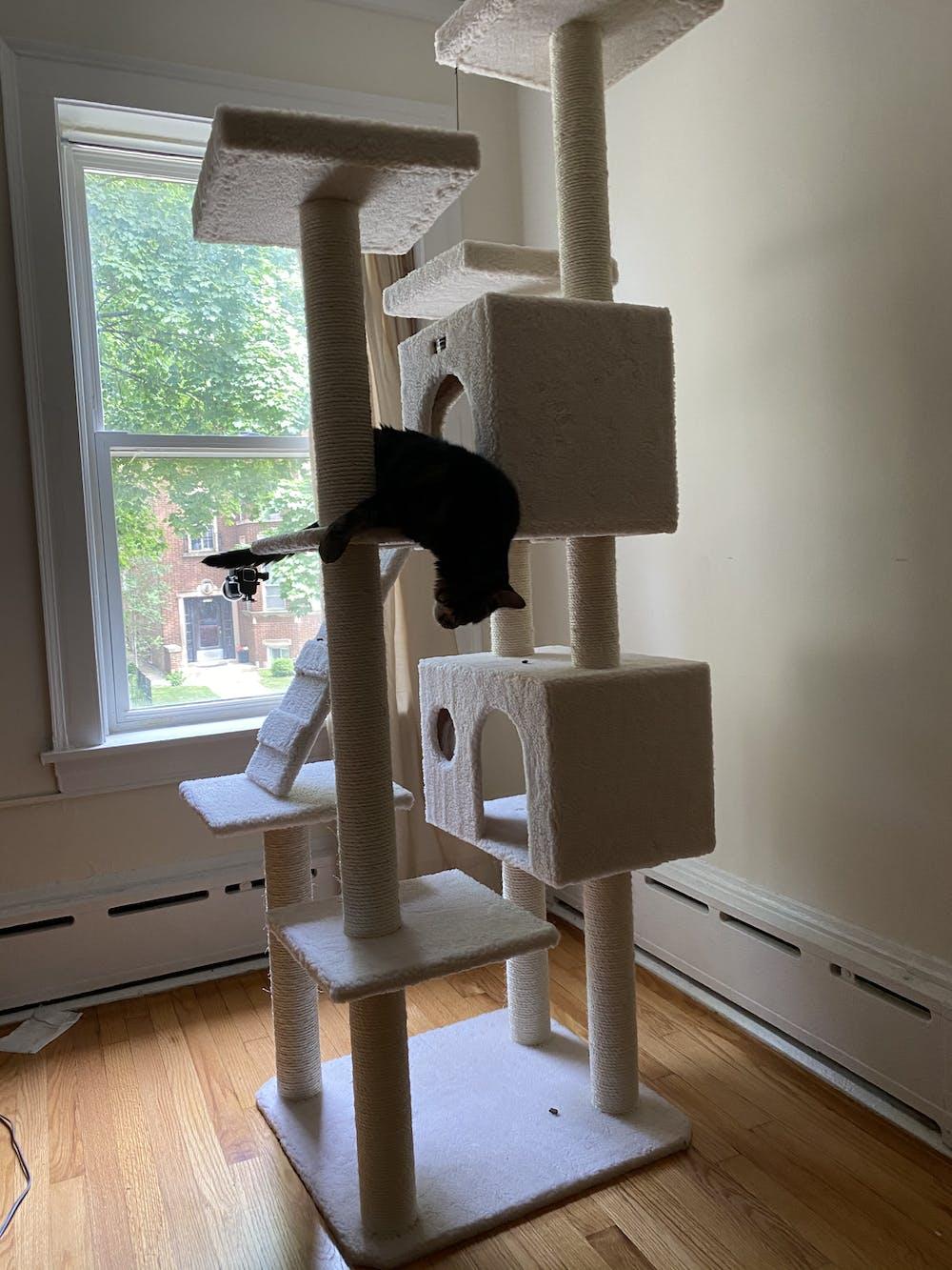 Armarkat Classic 77-Inch Cat Tree Model, Ivory (B7701)