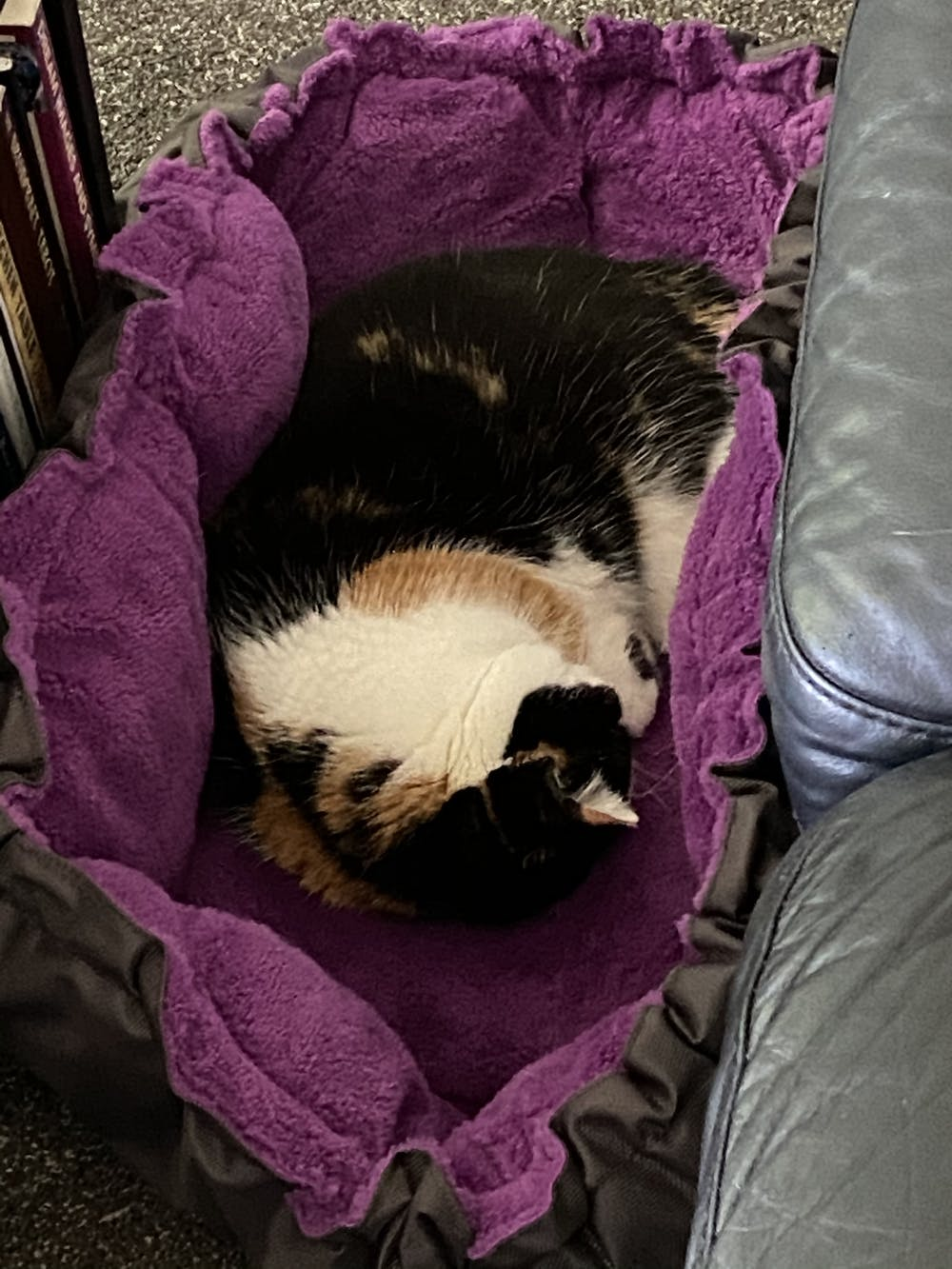 Comfy Clamshell