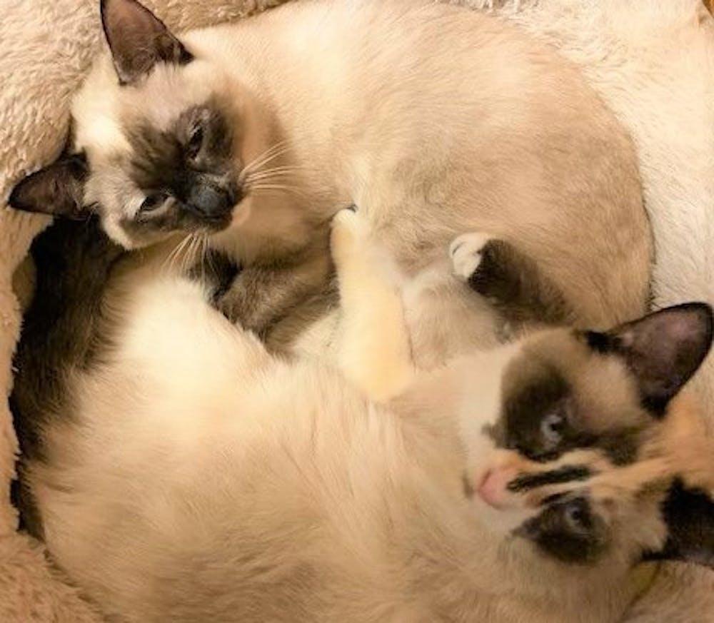 Feral Flower Formula - Feral Cat Solution