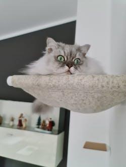 LucyBalu x Choupette - Limited Edition Swing Katzenhängematte