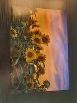 Tuusulan rantatie, auringonkukkapelto