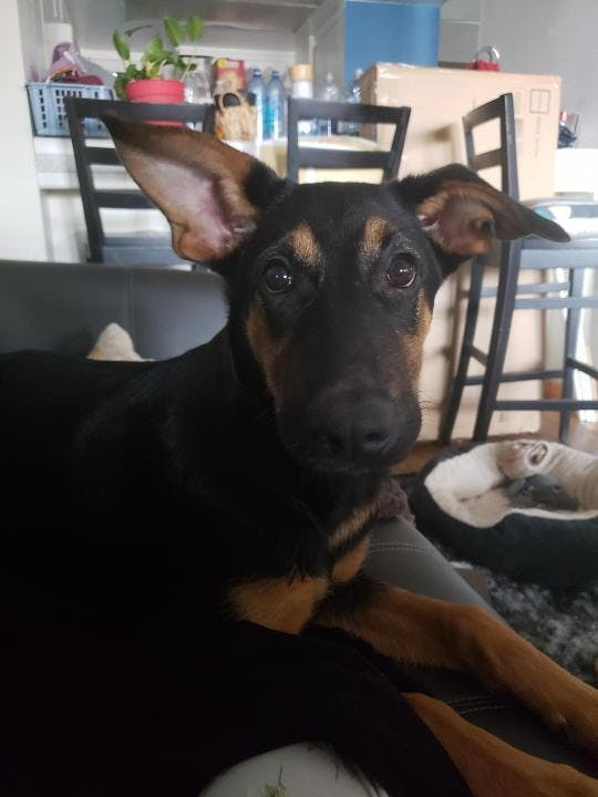 Reviews Patio Pet Life