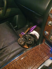 Pawmanity Front Seat Cover