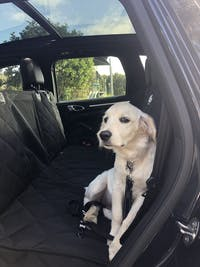 Pawmanity Window Hammock (Rear seat cover)