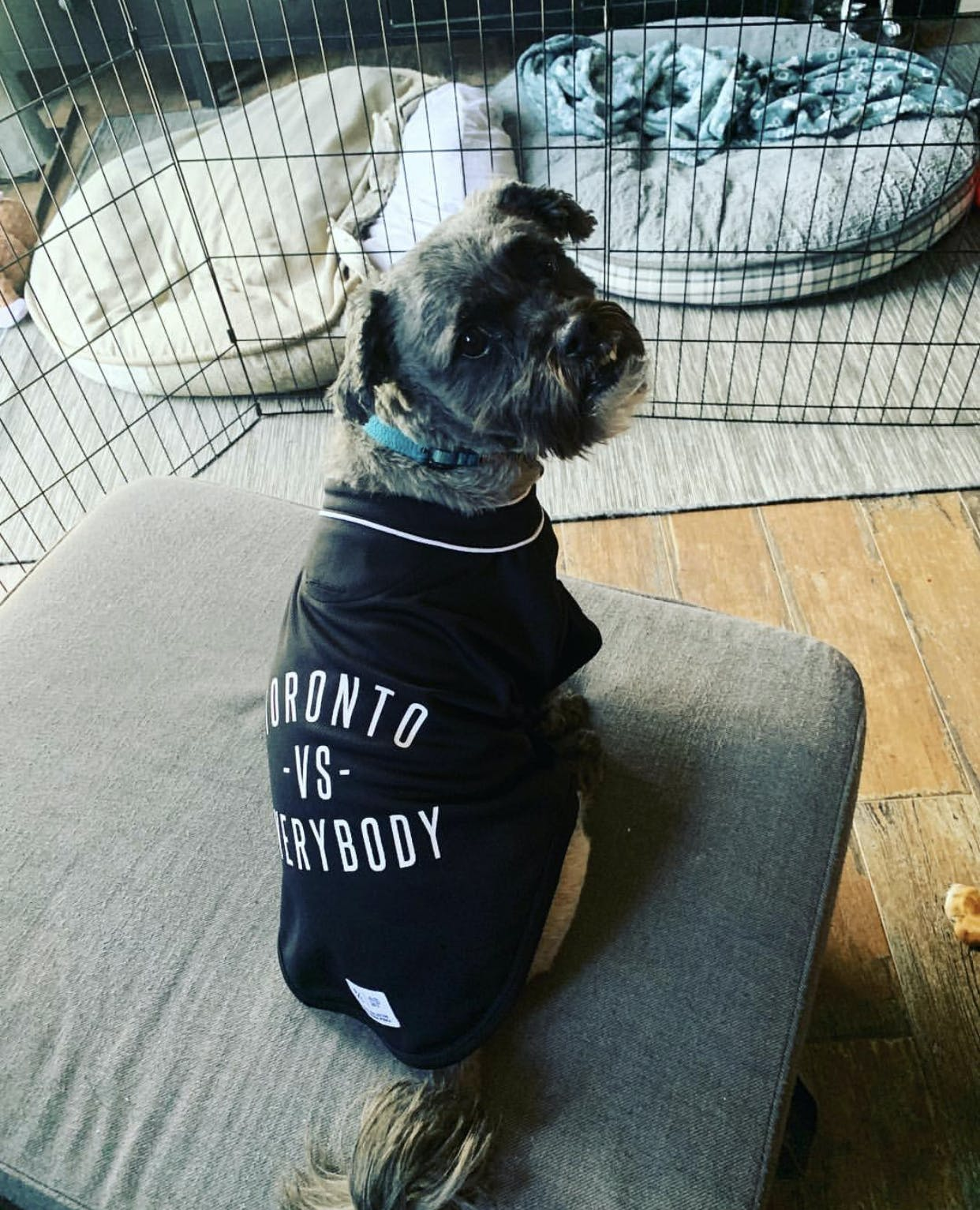 ee864aec0 P C x Canada Pooch Toronto -vs- Everybody® Button Up Jersey