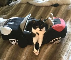 Unique Car Shape Pet Bed with Detachable Pad
