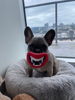 Funny Devil's Lip Squeaky Dog Toy