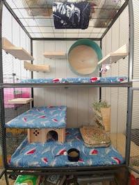 ESSENTIALS Set DOUBLE UNIT Critter Nation/Ferret Nation Cage Liners