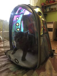 Transparent Capsule Pet Backpack
