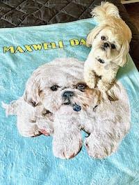 Maxwell Dawg Fleece Blanket