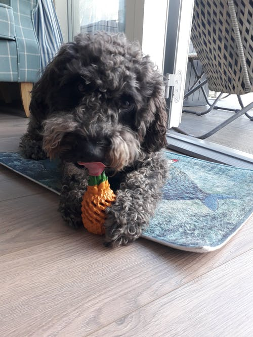 Pineapple Chew Toy-Small