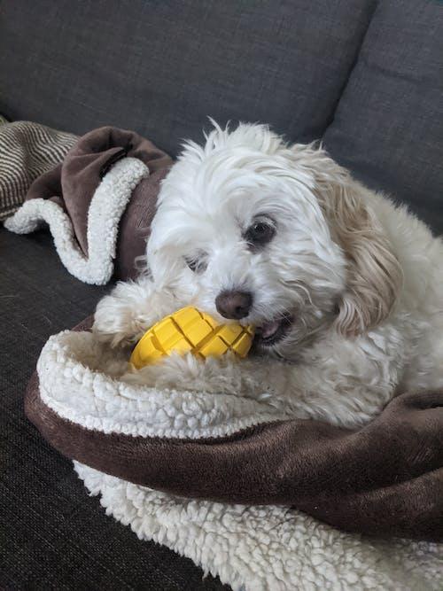Mango Chew Toy-Small