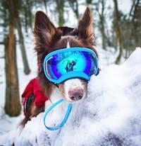Medium Goggle
