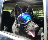X-Large Goggle