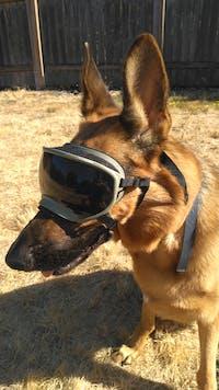 Large Goggle