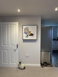 Robbie Dazzler Framed Canvas